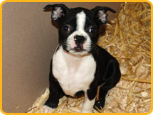 Puppies for sale Gloucester County