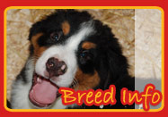 Breed Information