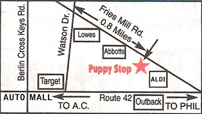 the Puppy Stop, Turnersville, NJ