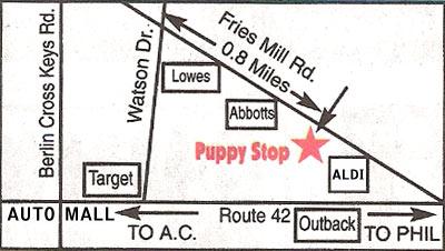 the Puppy Stop, Turnersville, NJ